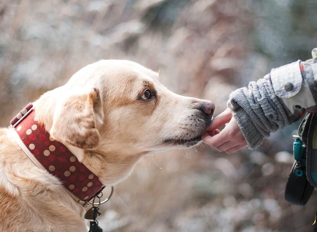 Home Made Dog Treats